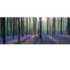 Kitchen Splashback 2440x610mm Picture: Bluebell Wood