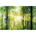 Kitchen Splashback 2440x610mm Picture: Enchanted Wood