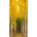 Designer Shower Wall Panel 2440 x 1220mm Picture: Autumn Birch
