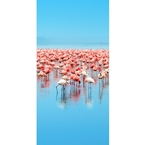 Designer Shower Wall Panel 2440 x 1220mm Picture: Flamingos